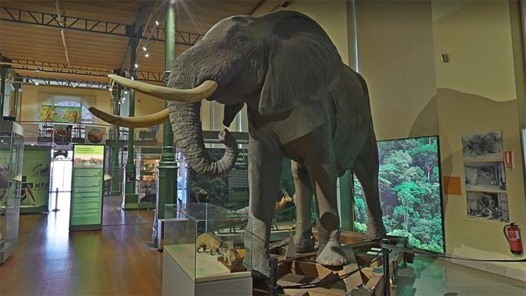 Google Arts & Culture или как погулять в эпоху динозавров