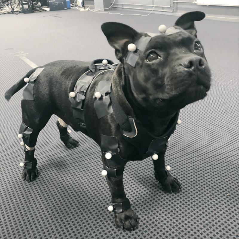 Remedy Entertainment добавить в своей новый ААА проект собаку